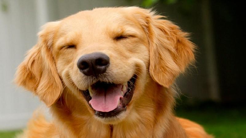 Caracteristicas generales de los perros